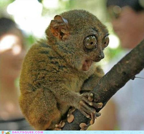 cute-animals-tarsier-is-shocked