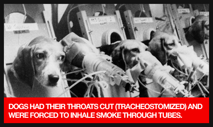 animalTesting-dogs