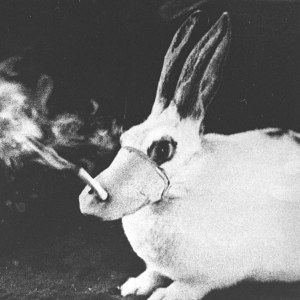 rabbit-smokingFB