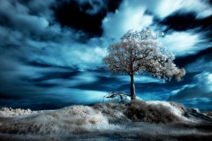 blue-sky-infrared-photography2