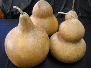 gourds3
