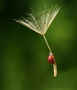 ladybug_paratrooper