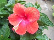 Flowers 016