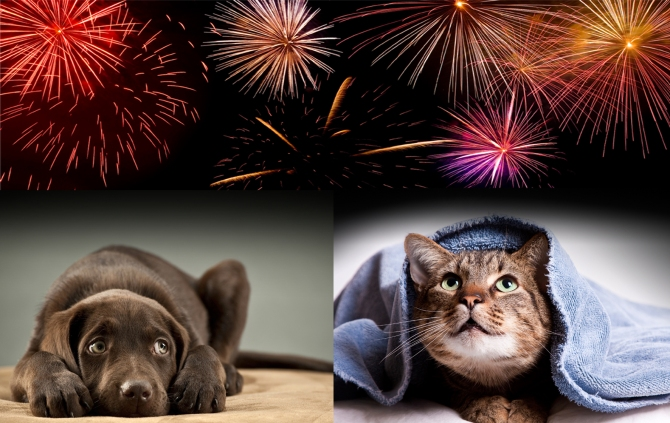 Fireworks-And-Dogs 7