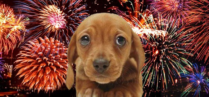 Fireworks-And-Dogs
