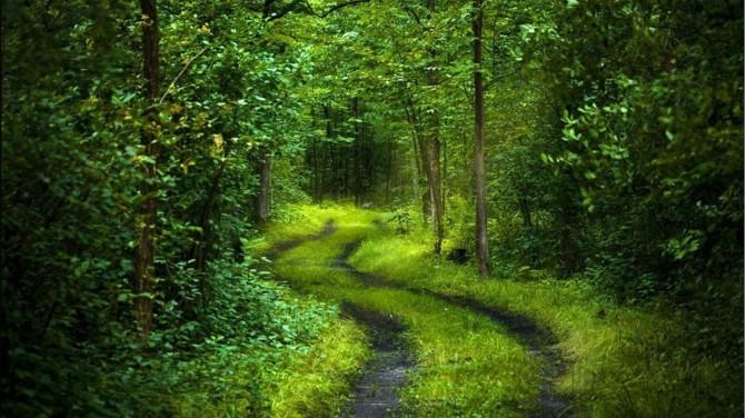calf path 3.jpg
