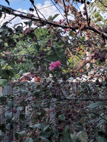 blooming fall.jpg